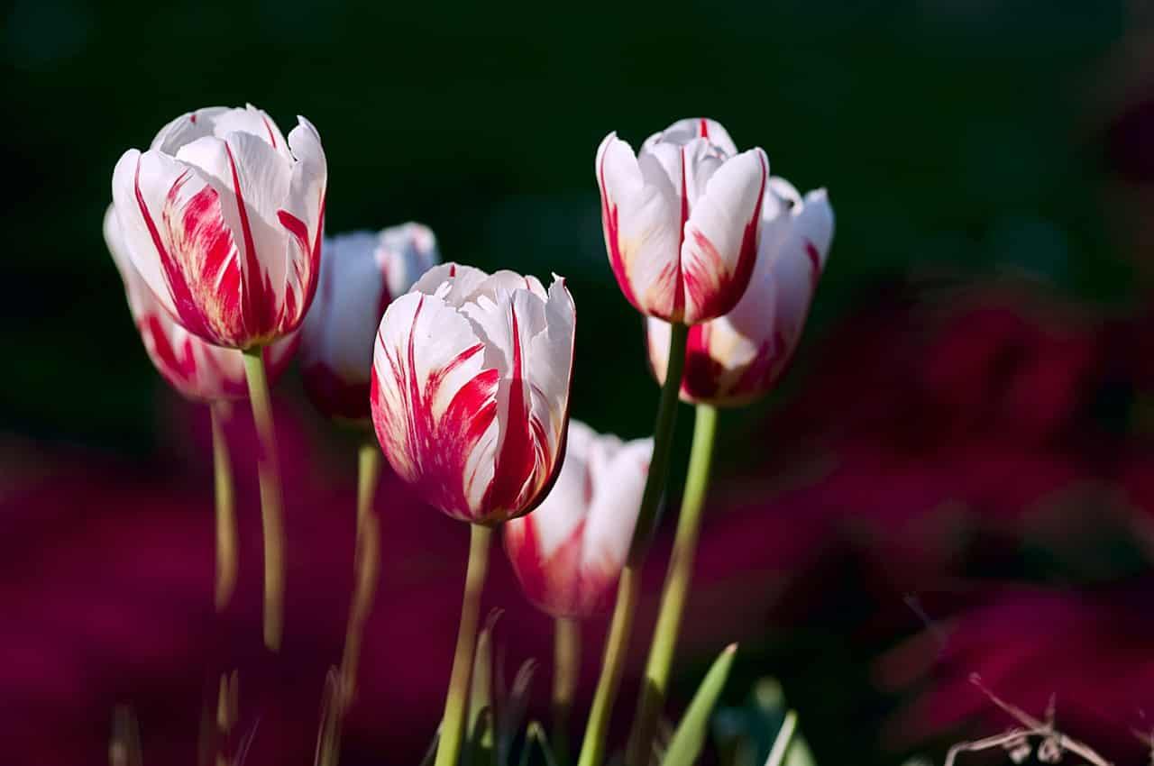 4 Phasen einer Beziehung - 1. Phase Frühling Aufbauphase