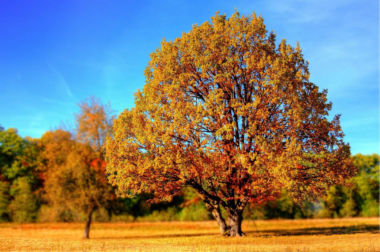 4 Phasen einer Beziehung - 3. Phase Herbst Krisenphase