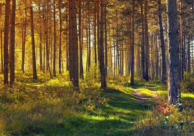 Er hat sich getrennt - Waldspaziergang