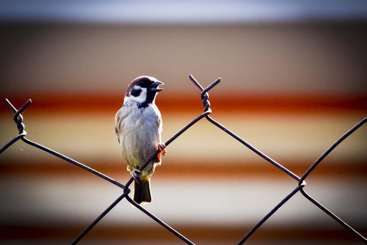 Narzissmus Beziehung - Trennung und Freiheit genießen