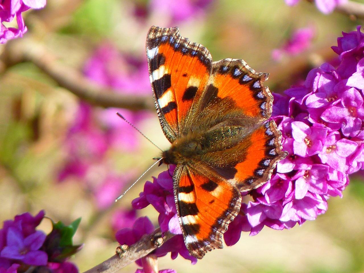 Verliebt trotz Beziehung - Schmetterlinge im Bauch