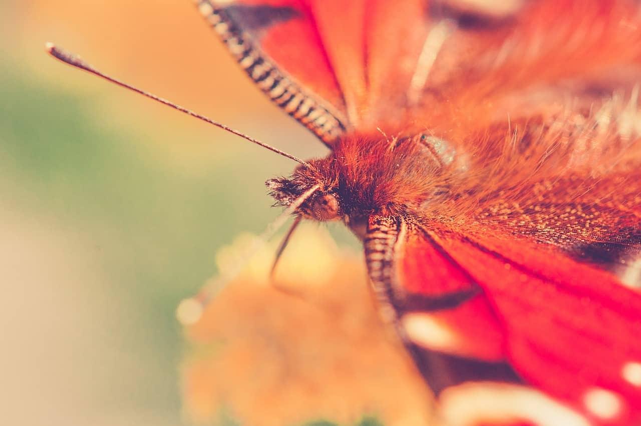 Neue Beziehung - Schmetterline im Bauch