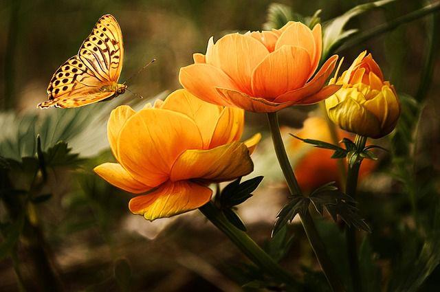 Woran erkenne ich, dass ich verliebt bin - Schmetterlinge im Bauch